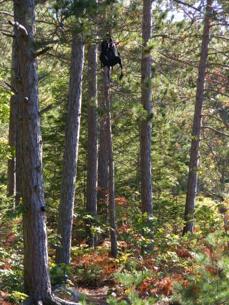 Proviant im Baum