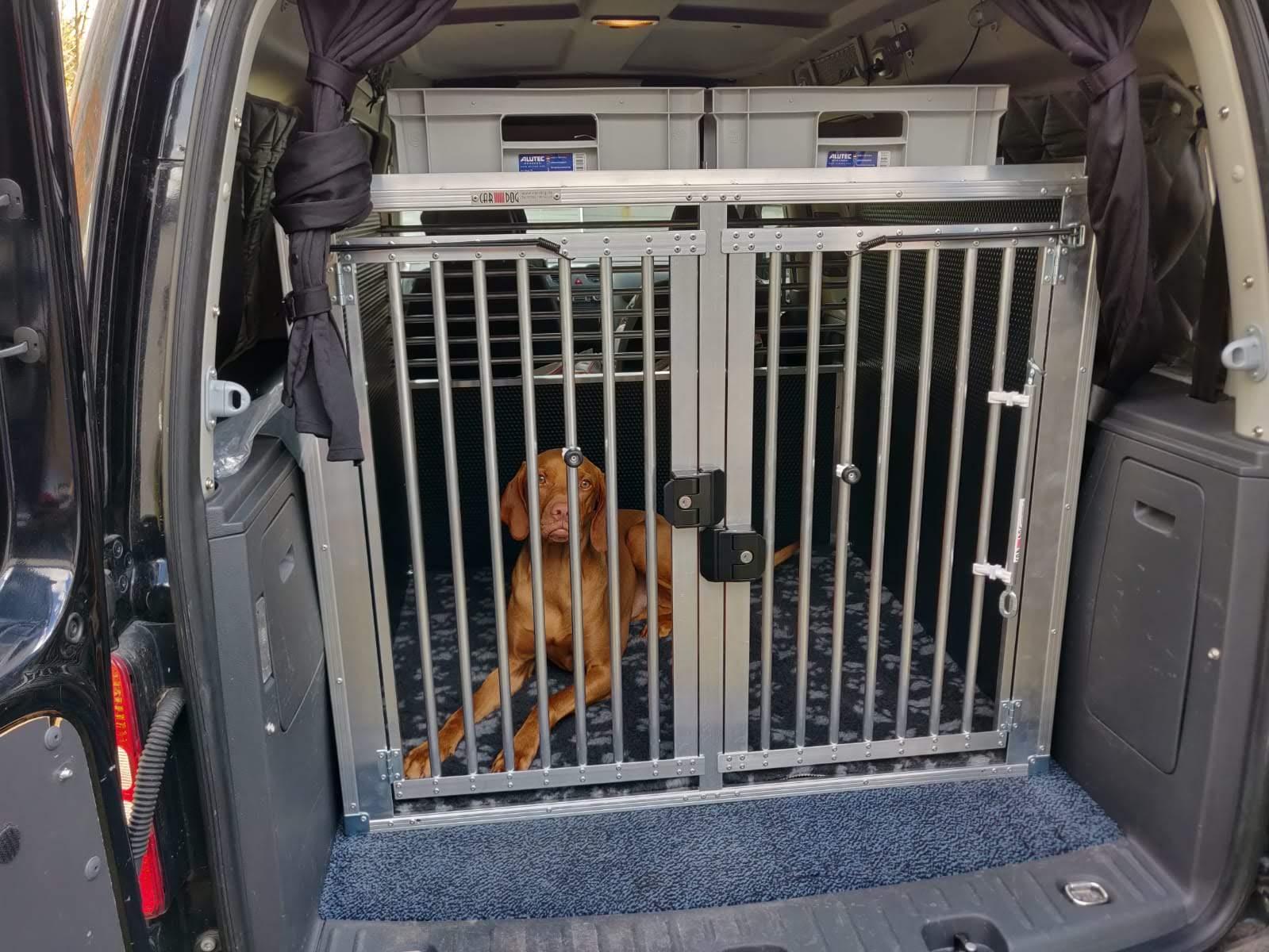Magyar Viszla liegt in Hundetranportbox