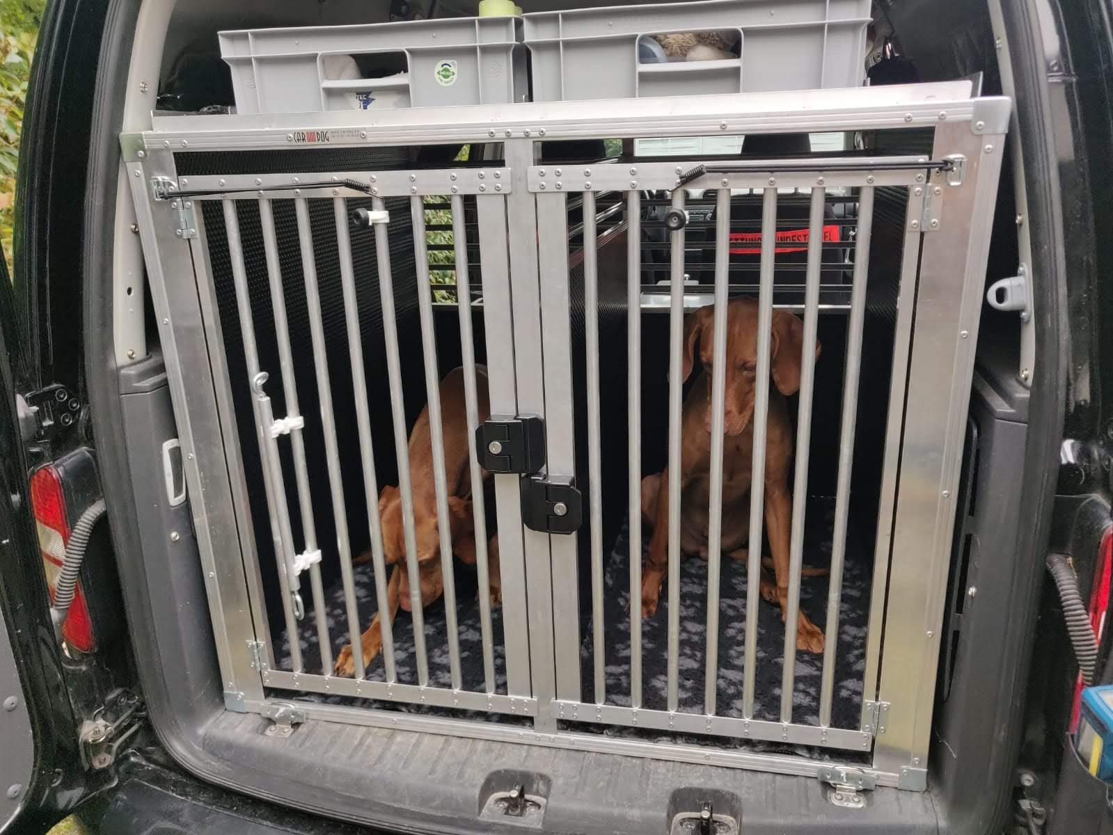 Zwei Magyar Vizsla Hunde liegen in einer Hundetransportbox
