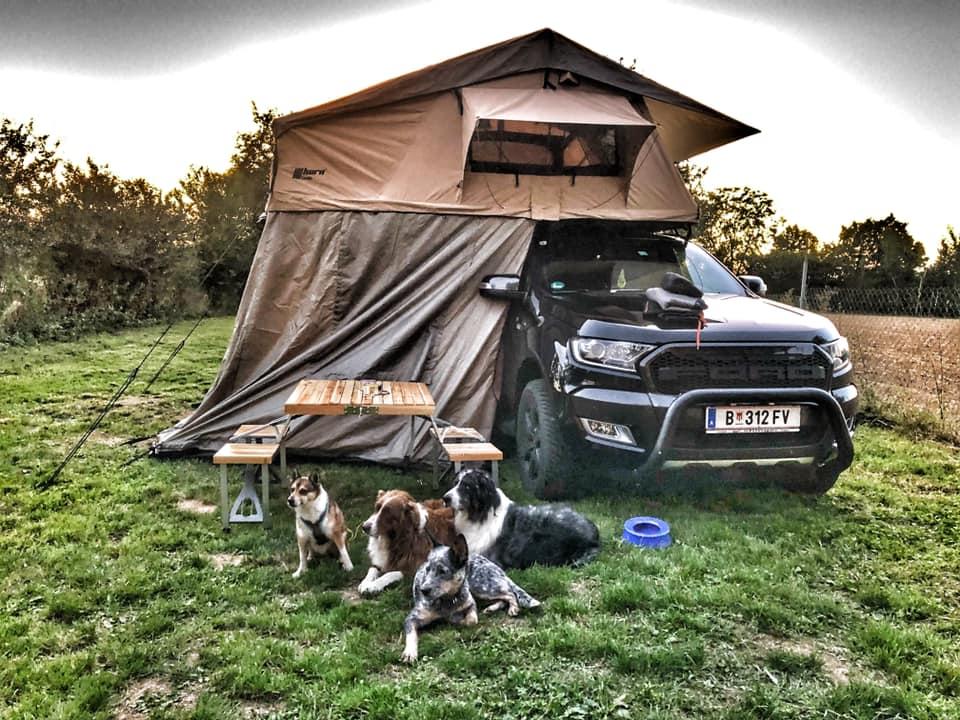 Hunde vor einem Fahrzeug mit Dachzelt