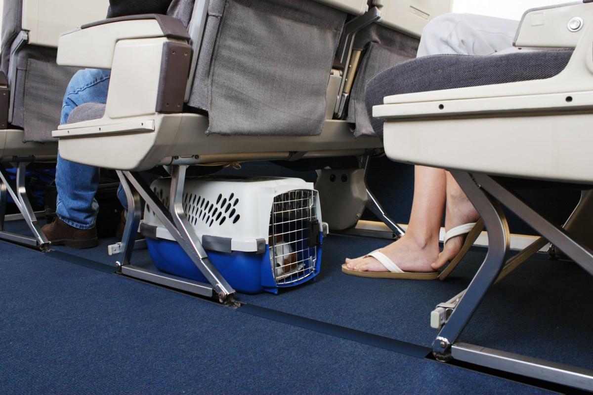 Hund in Transportbox unter dem Sitz in der Passagierkabine im Flugzeug