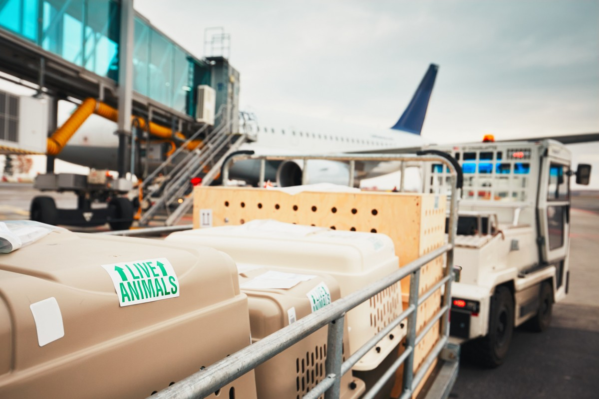 Hundetransportboxen im Gepäckwagen auf einem Rollfeld