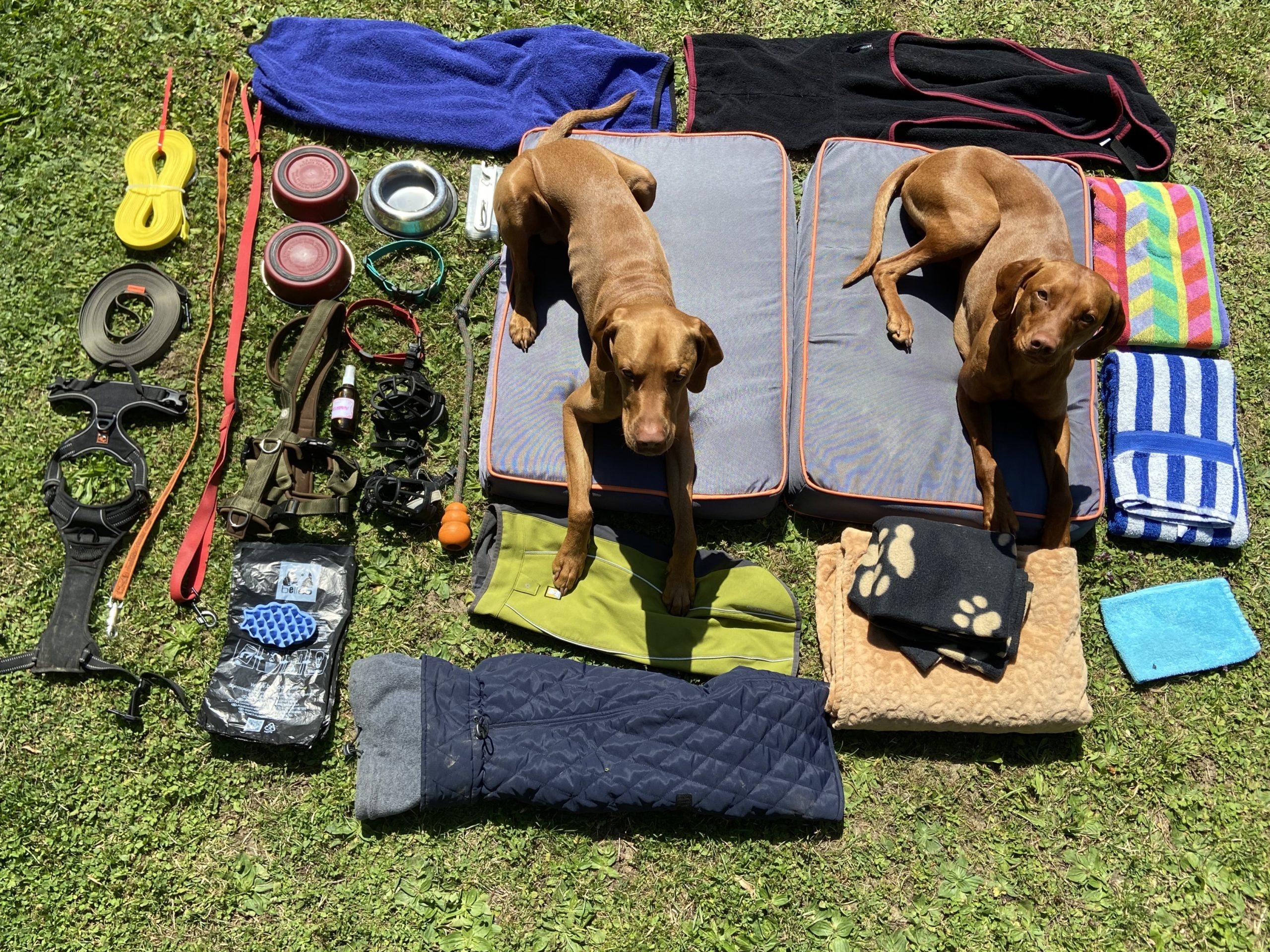 Man sieht vieles verschiedenes Hundezubehör auf einer Wiese ausgebreitet und zwei Hunde