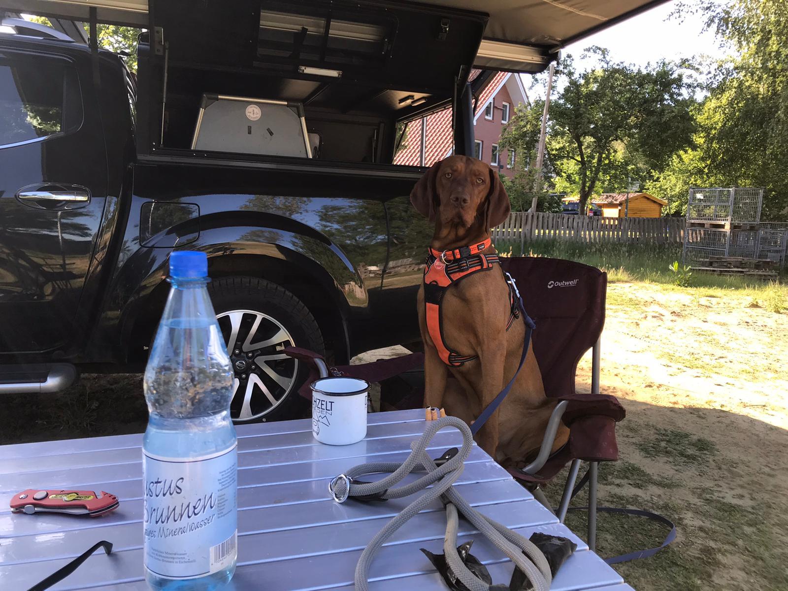 Hund sitzt vor einem Pickup auf einem Campingstuhl