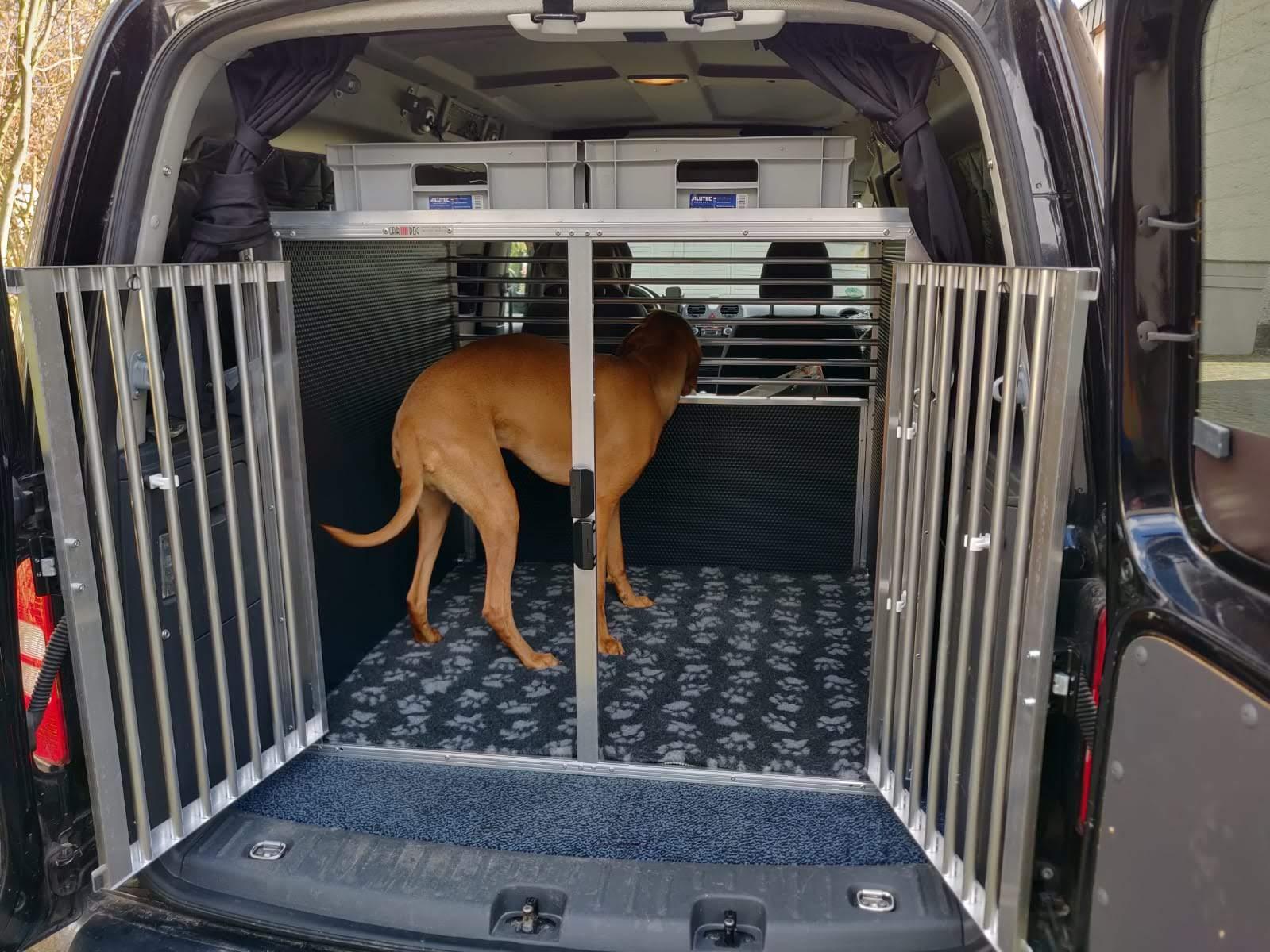 Magyar Vizsla dreht sich in einer Autohundebox