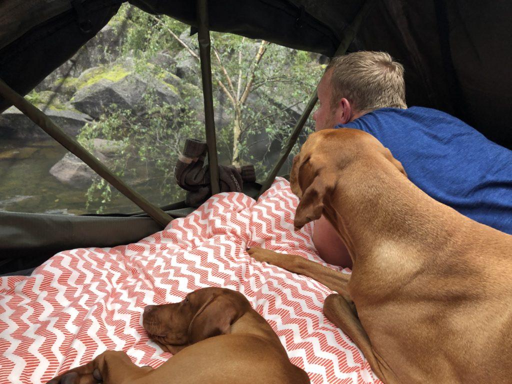 Hunde und Mann liegen im Dachzelt bei Regen