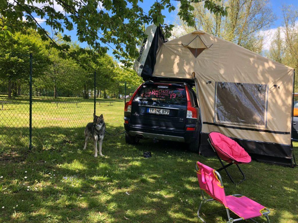 Dachzelt mit Auto und Hund